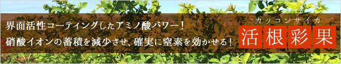 活根彩果紹介ページ