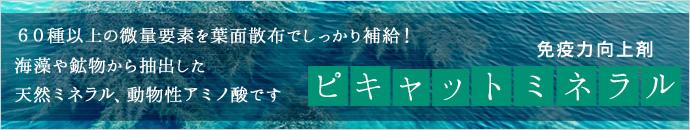ピキャット・ミネラル紹介ページ